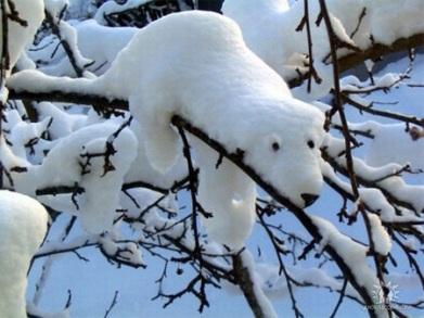 snowandice01
