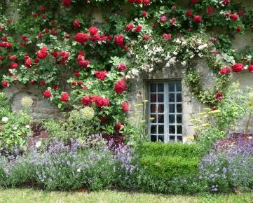 ete_jardin_maison_fleurie_fleurs_roses