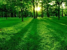 summer_green_nature_1600x1200