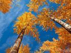 beautiful-autumn-scenery-723-16