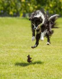 dog-scared-by-mouse-perfect-timing-photo