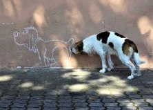 perfectly-timed-photos-2